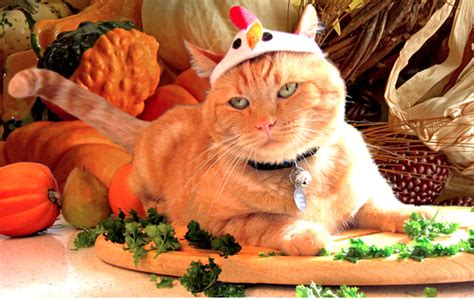 thanksgiving cat these 24 cats love thanksgiving or at least the food