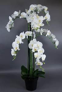 Kunstblumen Orchideen Topf : orchidee 120x70cm real touch wei cg k nstliche blume kunstpflanze kunstblumen ebay ~ Whattoseeinmadrid.com Haus und Dekorationen