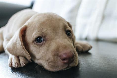 La Casa Cucciolo by Cucciolo Di 4 Cose Da Fare Prima Di Accoglierlo In Casa