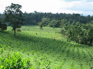 The Amazon Rainforest  Reforestation  Challenges And
