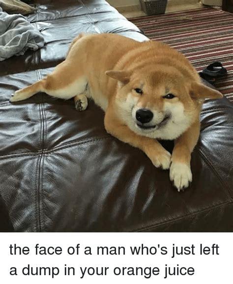 Orange Dog Meme - orange dog meme 28 images meme 2014 waiter dog meme lol animal kingdom pinterest 2927 best