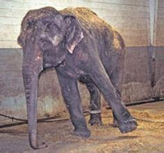 Images About Circus Ring Terror Pinterest