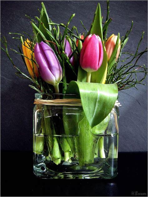 tulpen im glas tulpen fruehlingsblumen und fruehling blumen