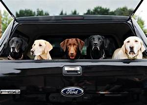 Dogs And Their Favorite Ford Truck