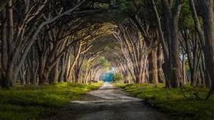 Forest, Sun, Rays, Grass, Trees, Road, Italy, Nature, Landscape, Wallpapers, Hd, Desktop, And