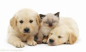 Cute Kittens And Puppies Sleeping Together Pictures Of ...