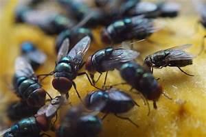 Comment Chasser Les Mouches : voici comment lutter contre les mouches avec des fleurs ~ Melissatoandfro.com Idées de Décoration