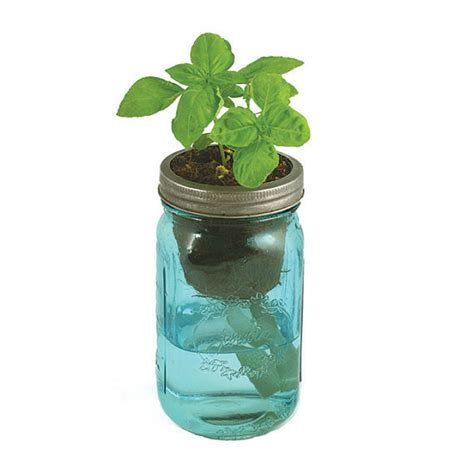 jar herb kit self watering planter for by modernsprout