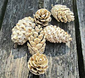 Craft, Invaders, -, Pin-tested, Bleaching, Pine, Cones