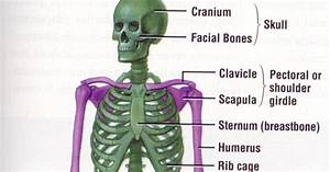 What Is The Skeletal System