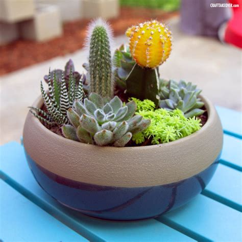 My New Succulent Container Garden  Craft Takeover