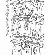 Forest Kelp Coloring Pages Aquarium Bay Monterey Animal Colouring Easy Simple Marine Jungle Tree Template Sketch Christmas Crafts Forests Montereybayaquarium sketch template