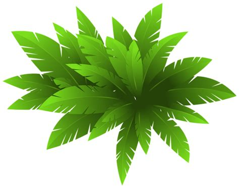 green plant decoration png clipart image flower clipart