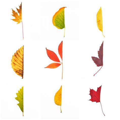 autumn leaf art prompt adventure   box