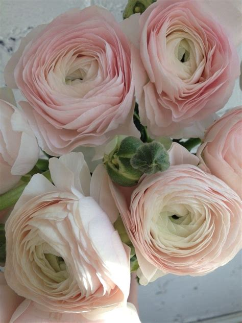 peony alternatives   wedding cloni ranunculus