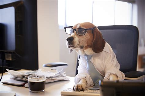 pros  cons  pet friendly offices chicago office