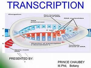 Transcription Ppt  Jmd
