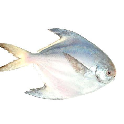 white pomfret fish  household packaging type