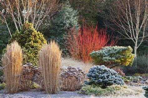border   winter garden bressingham gardens norfolk