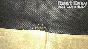 bed bugs bed bug eggs bed bug fecal staining on the With bed bugs in sofa