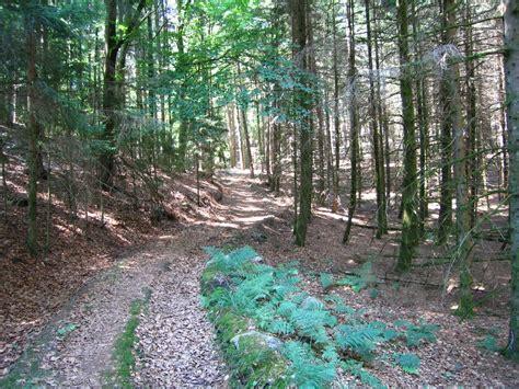panoramio photo of la for 234 t de am 233