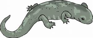 Big Green Salamander Clip Art at Clker.com - vector clip ...