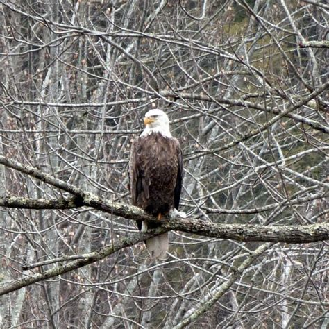 40 best images about birds of western north carolina on