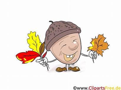 Clipart Cartoon Comic Grafik Gratis Eichel Bild
