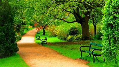 Nature Park Trees Spring Forest Bench Wallpapers