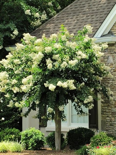 trees front yard love this tree front yard rennovation ideas pinterest front yards yards and trees