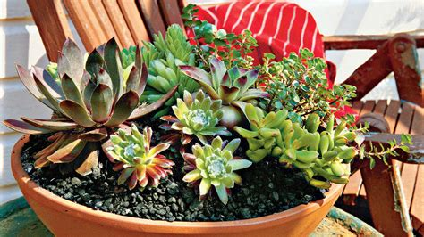 how to care for succulents in pots how to plant succulents in containers southern living