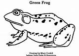 Animals Coloring Pages Dnr Frog sketch template