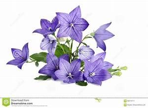 Beau Bouquet De Fleur : beau bouquet des fleurs de bell d 39 isolement sur le ~ Dallasstarsshop.com Idées de Décoration