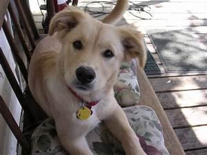 hypoallergenic dogs medium size