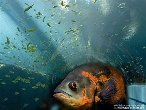 poisson en aquarium poisson d aquarium en 5 lettres