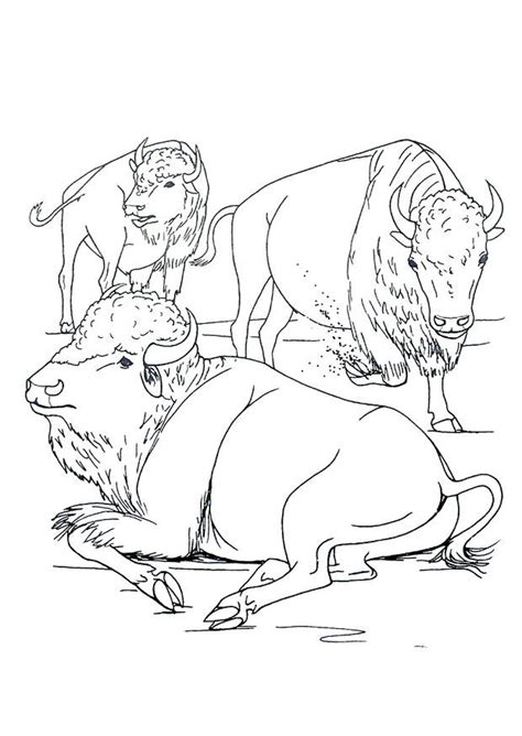 coloring page american bison  printable coloring pages img