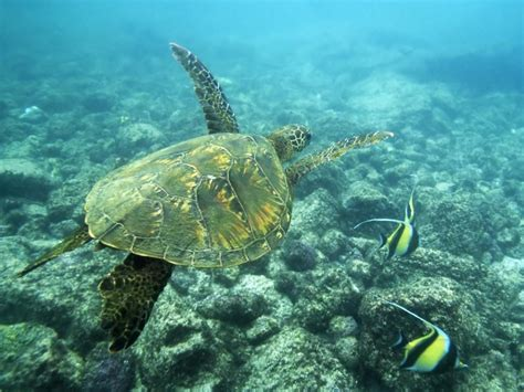 animated sea turtle wallpaper iphone wallpapersafari