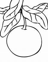 Grapefruit Coloring Pages Cranberry Citrus Sheet Template Getcolorings Fresh sketch template