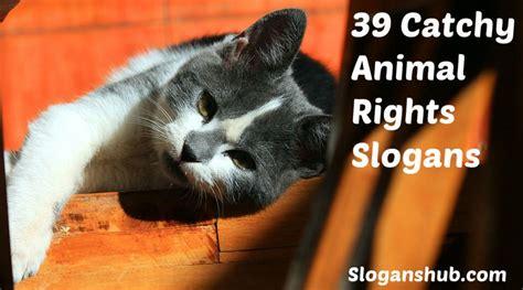 animal rights slogans animal slogans slogan animals