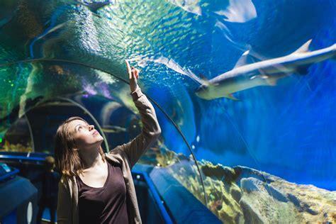 aquarium de la guadeloupe pointe 224 pitre arrivalguides
