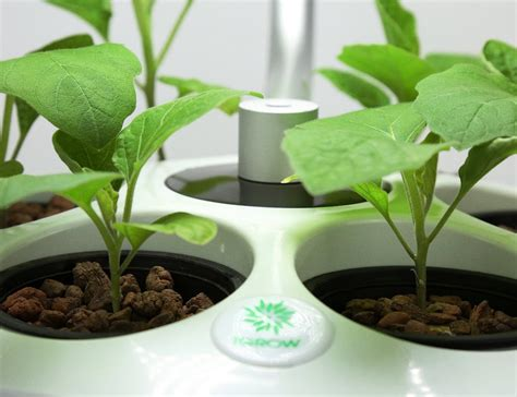 Igrow Led Indoor Hydroponics Herb Growing Kit » Gadget Flow