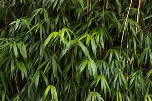 Bambus Im Winter : bambus berwintern so bringen sie ihren bambus durch den winter ~ Frokenaadalensverden.com Haus und Dekorationen