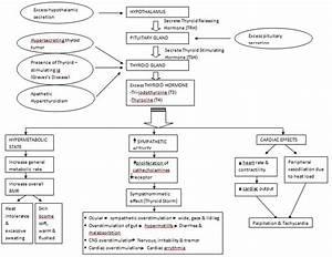 Hyperthyroidism  Pathophysiology