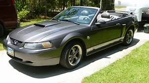 2004 Ford Mustang - Pictures - CarGurus