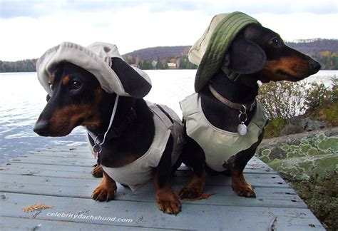 Images Of Wiener Dogs Dachshund Costume Www Imgkid The Image Kid