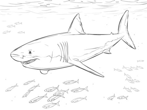 great white shark  pilot fishes coloring page  printable coloring pages