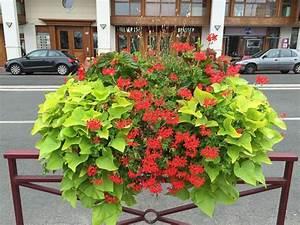 Patate Douce Plante : composition estivale rouge vif et vert acidul jardins ~ Dode.kayakingforconservation.com Idées de Décoration