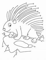 Porcupine Coloring Pages Printable Animal Sheets Cute Threatened Template Getcoloringpages Sketch Baby Getcolorings Puffer sketch template