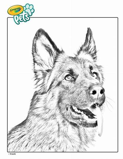 Coloring Shepherd German Dog Crayola Pet Colouring