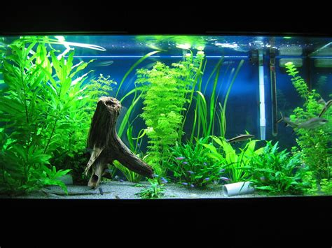 Ideas For Fish Tank by Fish Tank Decor Ideas Fish Tank Ideas Aquarium